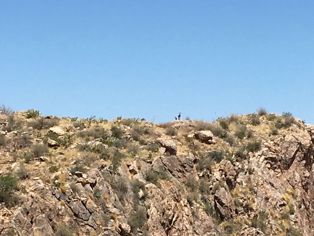 Mountain Goats on Pusch Ridge